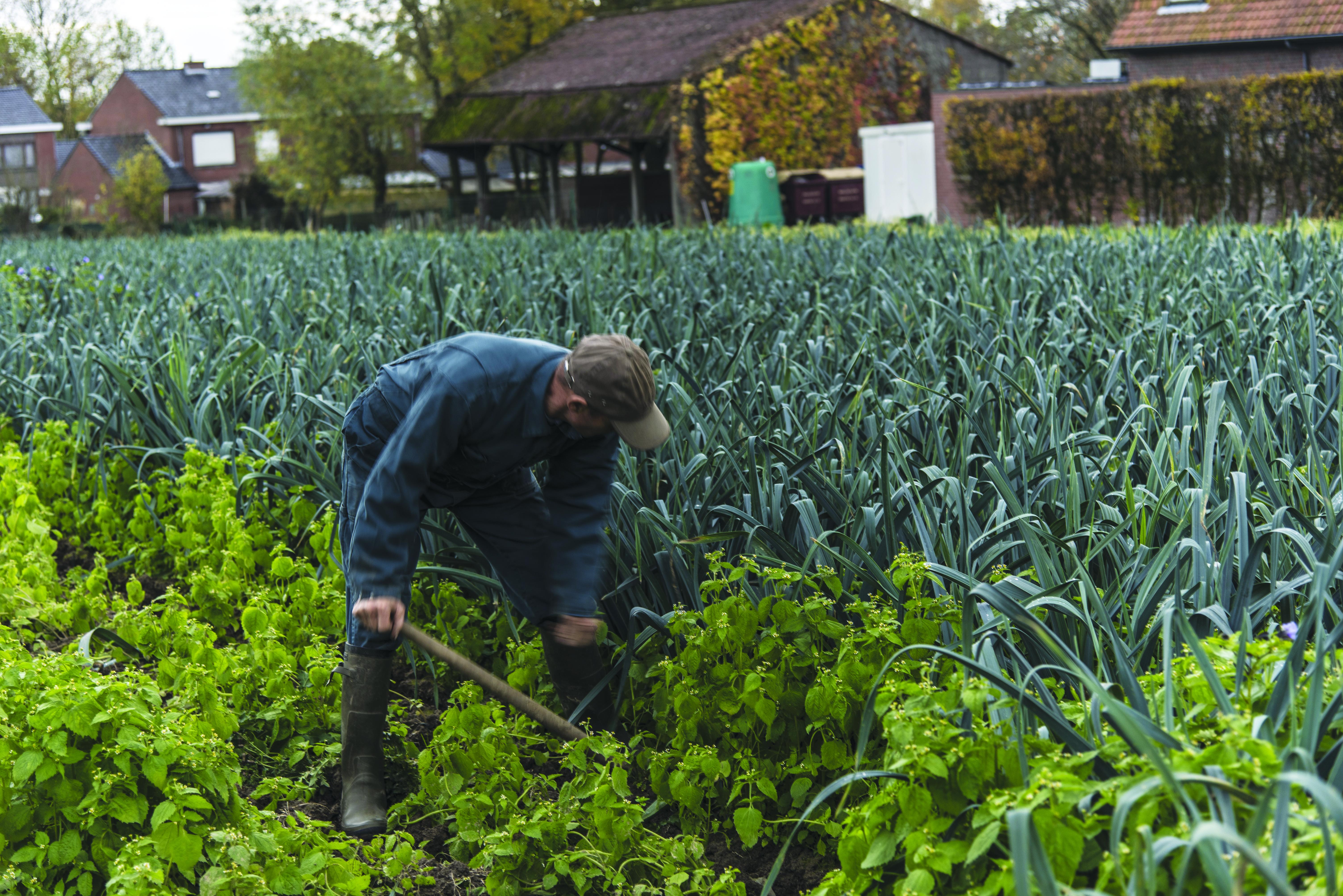 Sondage sur l'agriculture urbaine à Mouscron